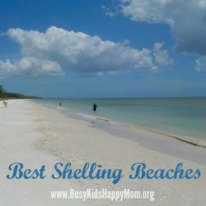 Where to Find the Best Shells