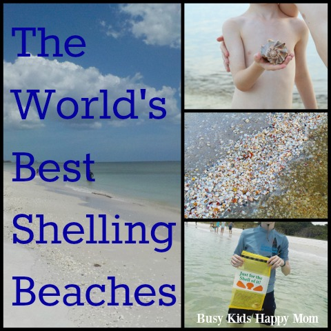 World's Best Shelling Beaches