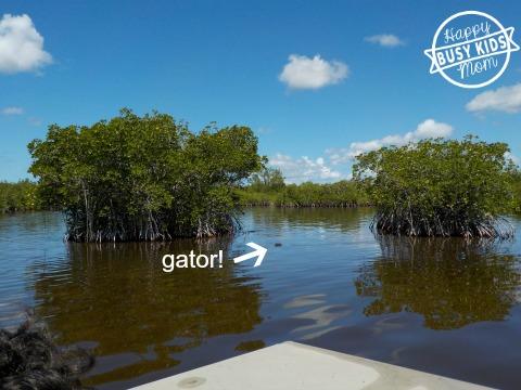 Airboat Everglades Alligators