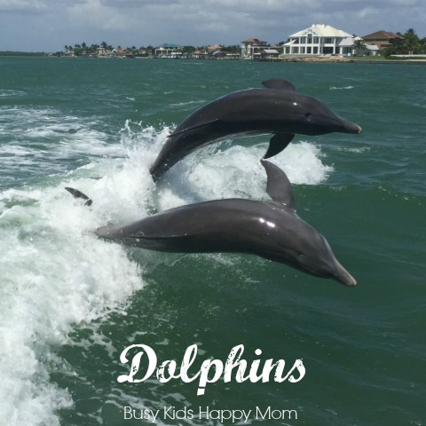 Where to find dolphins near Naples, Captiva, Marco Island, and Ft. Myers